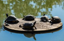 Turtles on a Sun Deck stock photos
