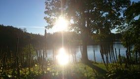 Sunny morning. Sun reflection on a pond. stock photos