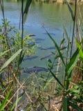Herein schauen zum See lizenzfreies stockfoto