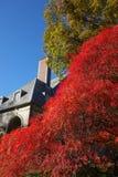 Herenhuistuinen Rhode Island de V.S. Stock Foto's