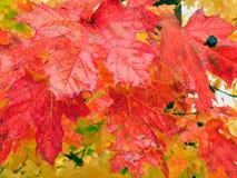 Herfst-1 Stock Afbeeldingen