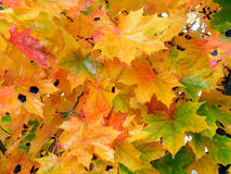 Herfst-2 Royalty-vrije Stock Afbeeldingen