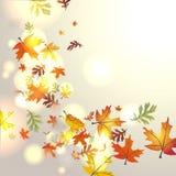 Herfst achtergrond Stock Foto