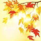 Herfst achtergrond Vector illustratie Royalty-vrije Stock Fotografie