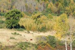 Herfst bergbos Royalty-vrije Stock Afbeelding