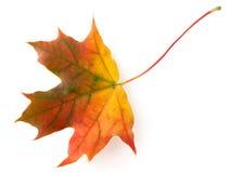 Herfst blad Stock Afbeelding