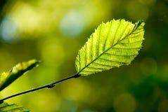 Herfst blad in de zon. Stock Foto's
