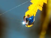 Herfst blad met waterdaling Royalty-vrije Stock Foto