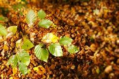 Herfst bladeren Royalty-vrije Stock Fotografie
