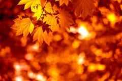 Herfst bladeren Stock Afbeeldingen