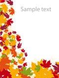 Herfst-bladeren achtergrond Stock Foto