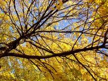 Herfst bladeren en takken Stock Foto's