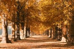 Herfst bomen in park Stock Fotografie