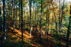 Herfst bos Stock Afbeelding
