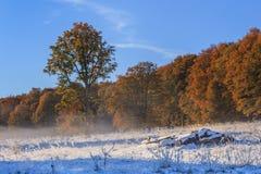 Herfst bos Stock Fotografie