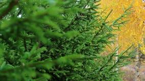 Herfst bos stock footage