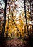 Herfst bosweg royalty-vrije stock afbeeldingen