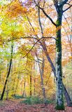Herfst bosweg royalty-vrije stock foto