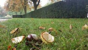 Herfst di autunno Fotografia Stock