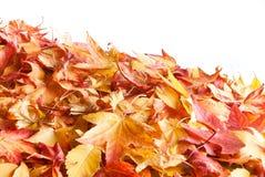 Herfst doorbladert Stock Afbeeldingen