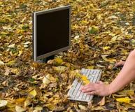Herfst, een mens die bij een computer aan een gevallen geel gebladerte in de stad de werken stock foto's