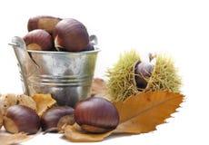 Herfst fruit Stock Foto