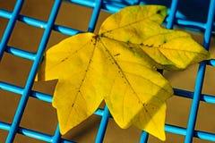 Herfst geschilderd blad Stock Afbeeldingen