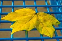 Herfst geschilderd blad Royalty-vrije Stock Foto's