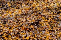 Herfst gevallen bladeren van een boom op de oppervlakte van een meer royalty-vrije stock fotografie