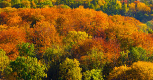 Herfst gouden bomen Royalty-vrije Stock Afbeeldingen