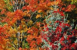 Herfst-KERSTMIS een Kerstboom in Autumn Forest Royalty-vrije Stock Foto