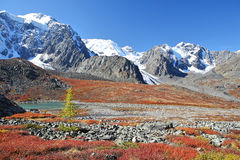 Herfst kleuren in Bergen Altai royalty-vrije stock foto's