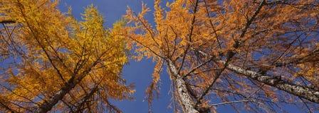 Herfst kleuren in Dolomiet Royalty-vrije Stock Foto