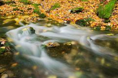 Herfst kleurrijk bos met kleine kreekstroomversnelling Royalty-vrije Stock Foto