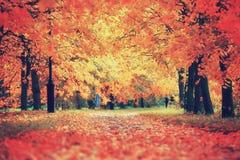 Herfst kleurrijke scène Royalty-vrije Stock Foto's