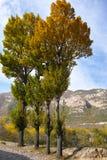 Herfst landschap Royalty-vrije Stock Foto