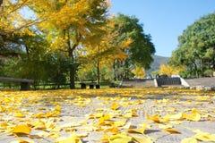Herfst landschap Royalty-vrije Stock Foto's