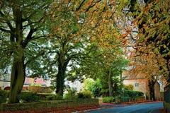 Herfst oranje uitbarsting binnen een enorme boomluifel in Hoge Melton, Doncaster royalty-vrije stock fotografie