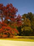 Herfst park stock afbeelding