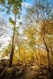 Herfst park Autumn Trees vanaf de bovenkant van berg stock foto