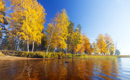 Herfst park Scène 5 van de vijver Royalty-vrije Stock Fotografie