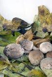 Herfst samenstelling met paddestoelen Stock Fotografie