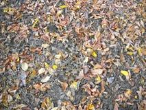 Herfst shedded bladeren en paardebloem royalty-vrije stock fotografie
