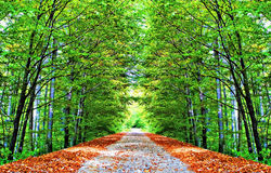 Herfst steeg Stock Foto's