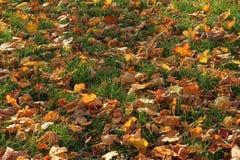 Herfst textuur royalty-vrije stock afbeelding