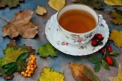 Herfst thee met kruiden Royalty-vrije Stock Afbeelding