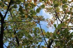 Herfst van de boom de hoogste mening omhoog royalty-vrije stock fotografie