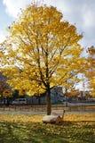 Herfst van stoel de gele bladeren Stock Afbeelding