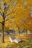 Herfst van stoel de gele bladeren Royalty-vrije Stock Foto
