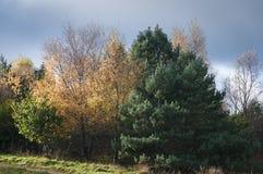 Herfst Vergankelijke Kleur Stock Foto's